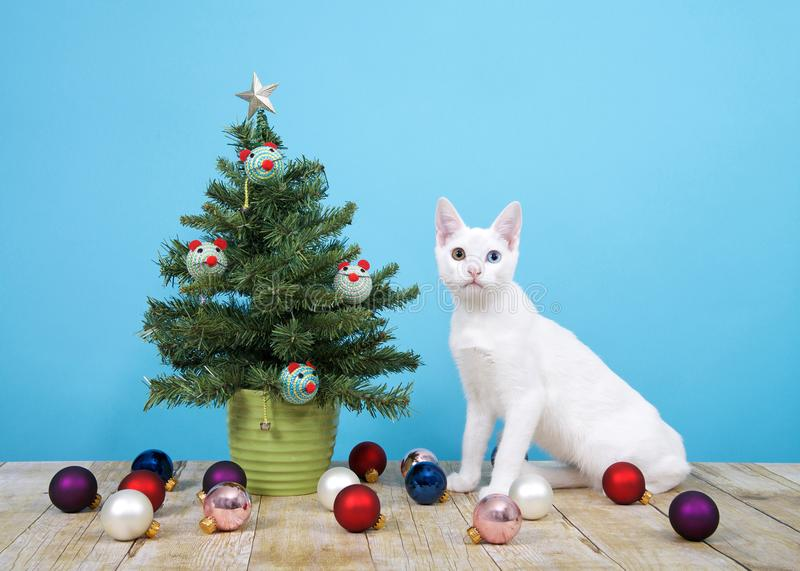 Miniature Christmas tree with cat toys and fallen ornaments cat sitting next to it. Christmas tree in green pot on wood surface, blue background, mouse shaped stock image