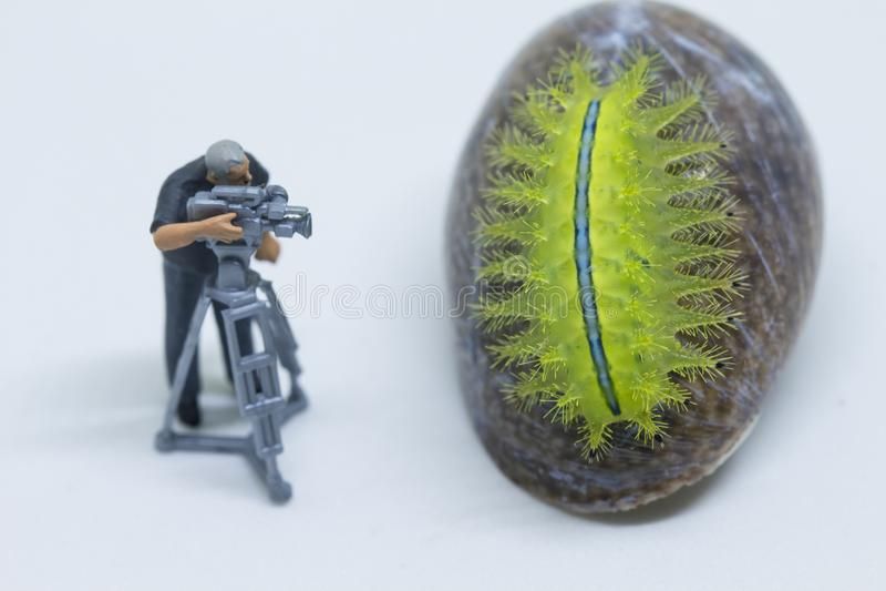 Miniature doll cameraman and green caterpillar. Videographer at work shooting tropical animal. stock photography