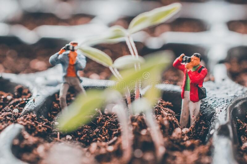 Photographers shooting plants. Miniature figurine photographers or tourists shooting tomato plants in an indoor sprouting tray. We miss nature concept stock photos