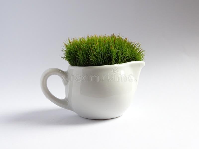 Miniature Gardening stock images