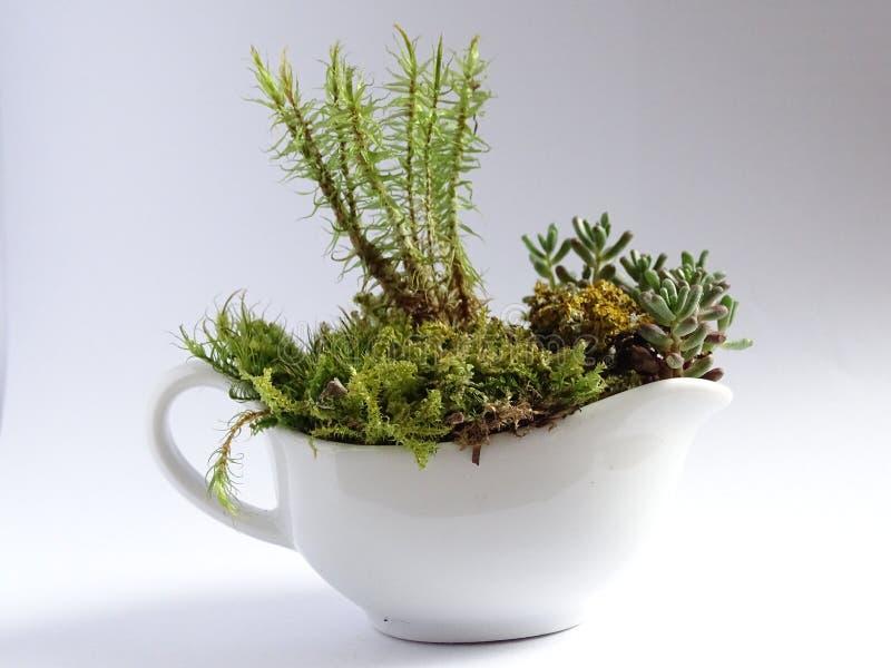 Miniature Gardening royalty free stock photography
