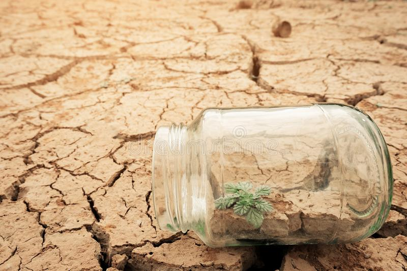Miniature glass jar with young tree seedling growing in soil, on dry and crack empty land of background. Earth day concept royalty free stock photos