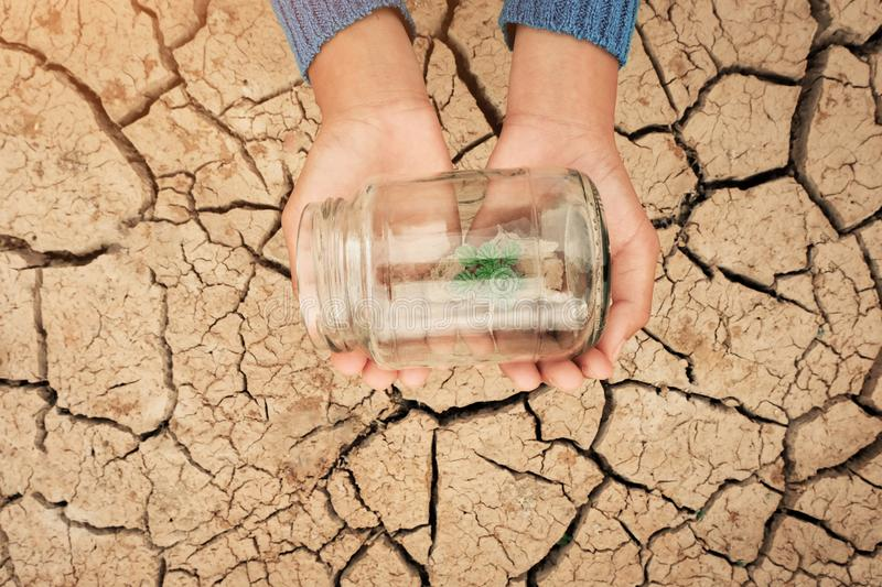 Miniature glass jar with young tree seedling growing in soil, on dry and crack empty land of background. Earth day concept stock photos