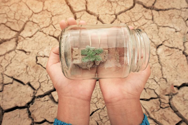 Miniature glass jar with young tree seedling growing in soil, on dry and crack empty land of background. Earth day concept royalty free stock images