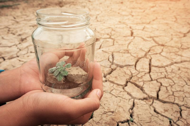 Miniature glass jar with young tree seedling growing in soil, on dry and crack empty land of background. Earth day concept stock photography