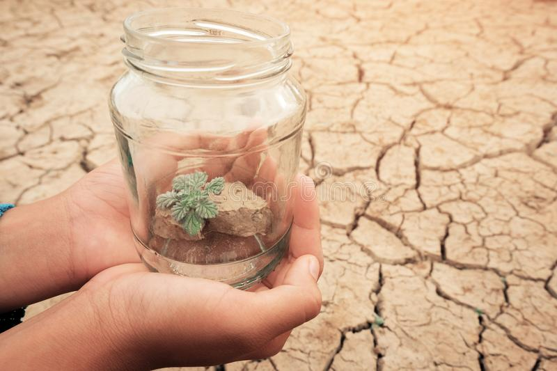 Miniature glass jar with young tree seedling growing in soil, on dry and crack empty land of background. Earth day concept stock images