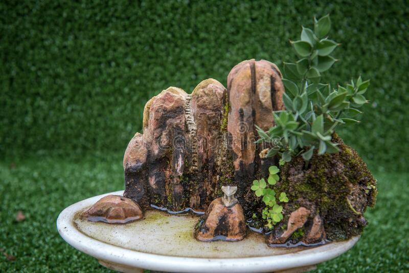A miniature landscape bonsai royalty free stock photography