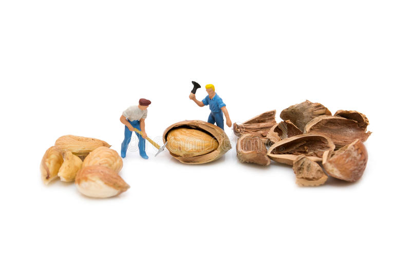 Miniature people chopping nuts. Hazelnut. Little people break ha stock image