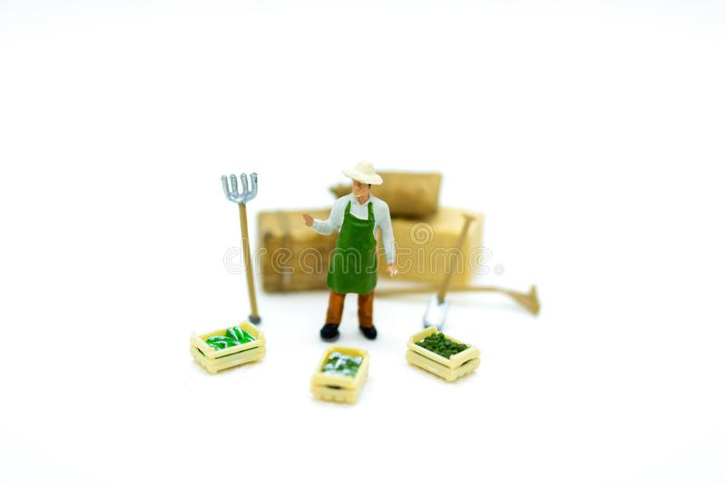 Miniature people :Farmers with basket vegetable ,fruit. Image use for agricultural crops.  royalty free stock photography