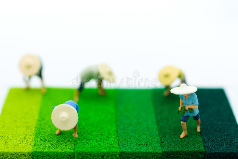 Miniature people: Farmers do farming on the green floor. Image use for Farmer`s career in the community, Income from agriculture.  royalty free stock photography