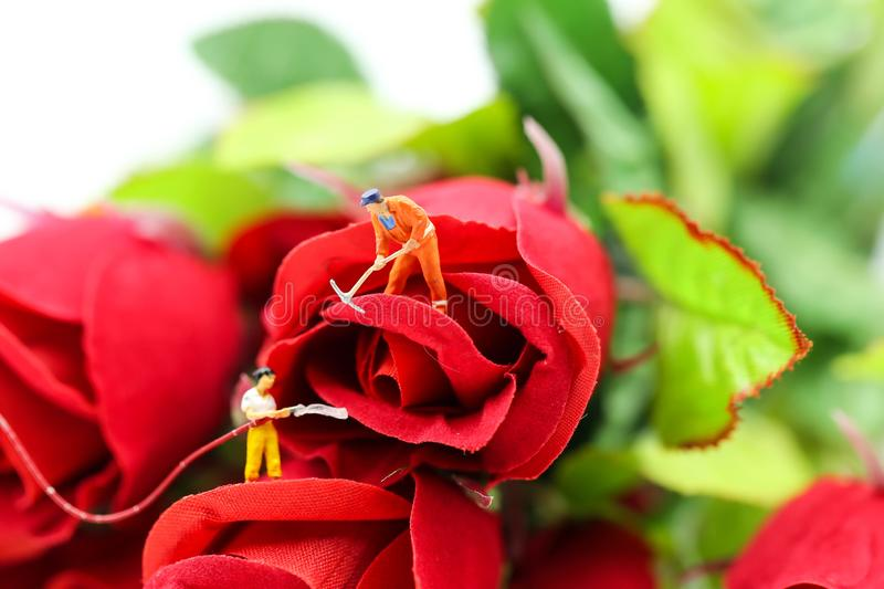 Miniature people : gardeners with red roses stock photography
