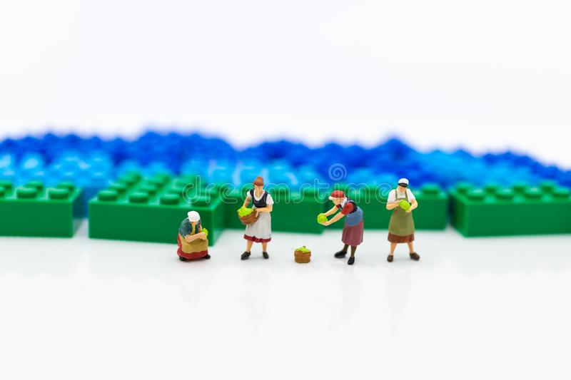 Miniature people: Gardeners and the results of agriculture, vegetables. Image use for distribution to the market. Miniature people: Gardeners and the results of stock image