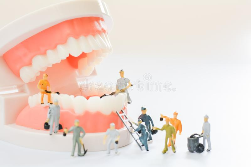 Miniature people, small model human figure clean model teeth with copy space. Medical and dental concept. Team work on dental care. Close up royalty free stock images