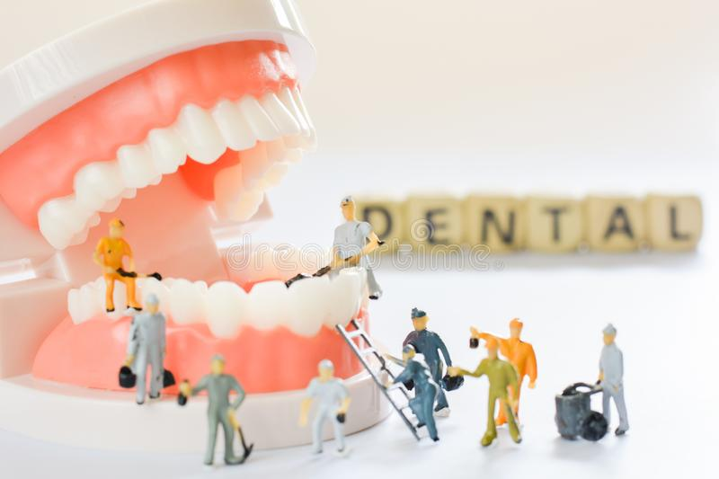 Miniature people, small model human figure clean model teeth with copy space. Medical and dental concept. Team work on dental care. Close up royalty free stock photo