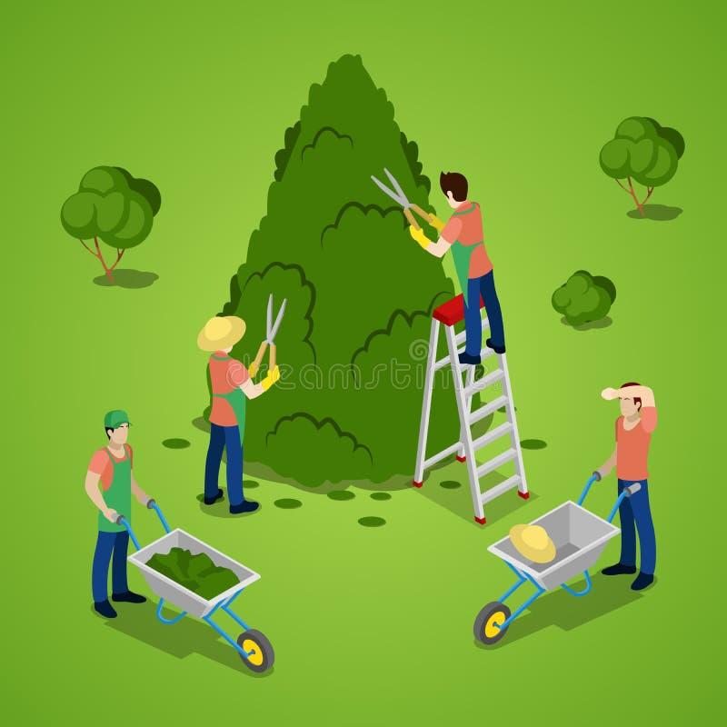 Miniature People Trimming Tree. Gardener Working. Isometric illustration stock illustration