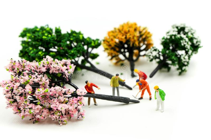 Miniature people : worker using a chainsaw to cut down a large beech tree, Deforestation concept.  royalty free stock image