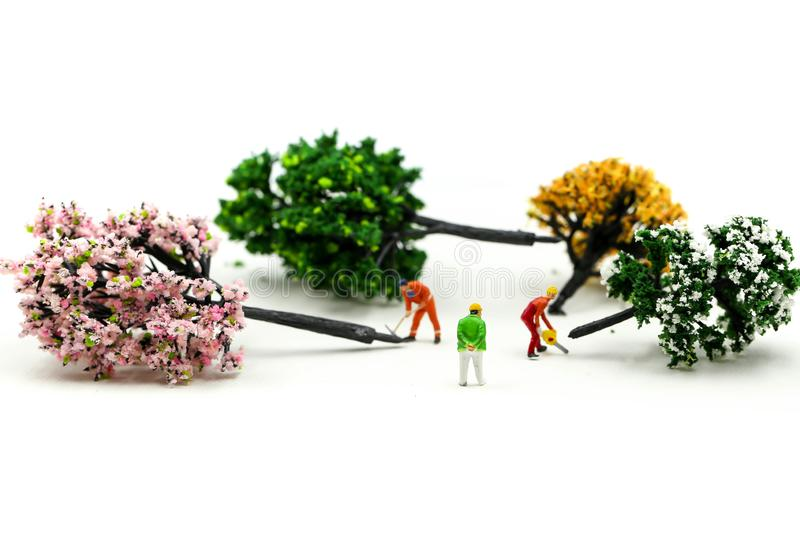 Miniature people : worker using a chainsaw to cut down a large beech tree, Deforestation concept.  royalty free stock photography