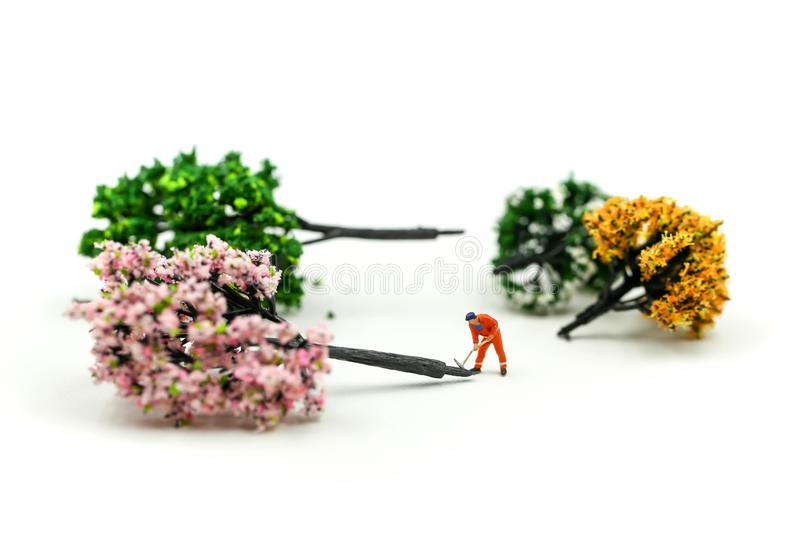 Miniature people : worker using a chainsaw to cut down a large beech tree, Deforestation concept.  stock photography