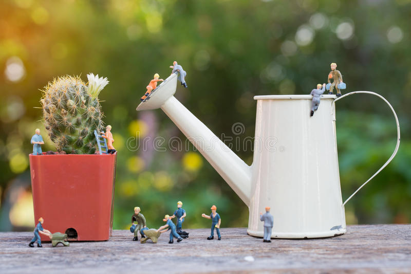 Miniature people working in the garden. Miniature people working in the cactus garden royalty free stock images
