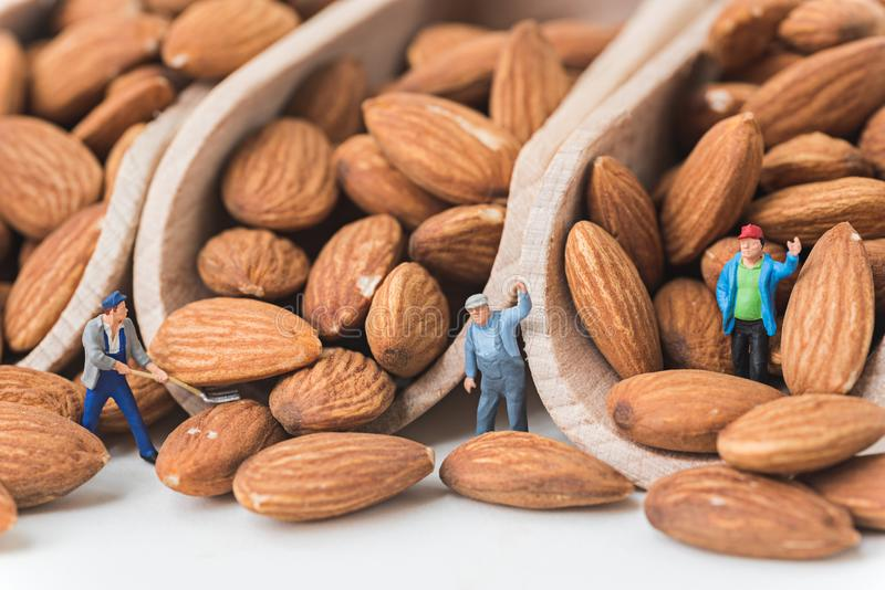 Miniature people working on raw natural whole almonds in the scoop.  stock photos