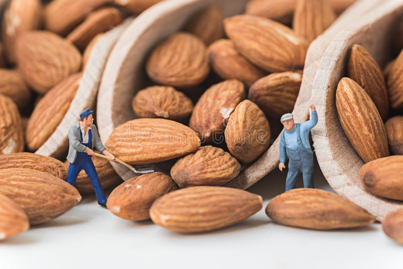Miniature people working on raw natural whole almonds in the scoop.  stock photo