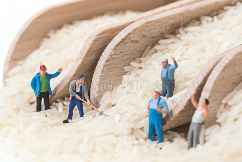 Miniature people working on uncooked rice in wooden scoop.  royalty free stock photography