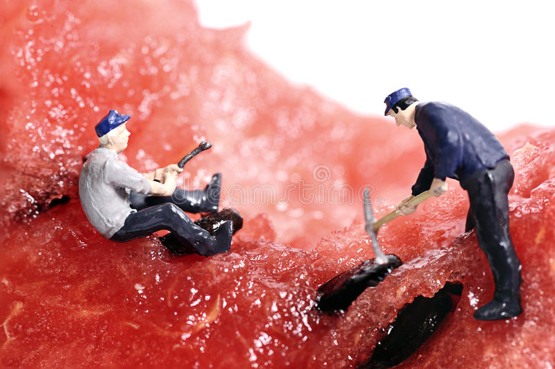 Miniature peoples work on water melon royalty free stock photo