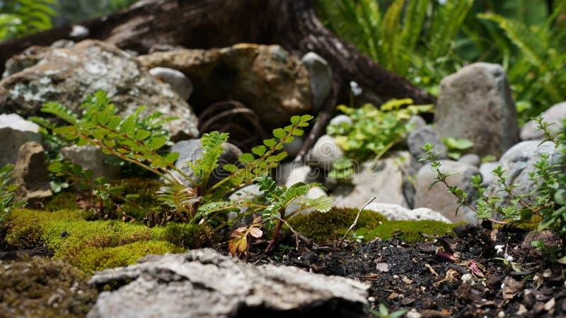 Miniature plant view stock images