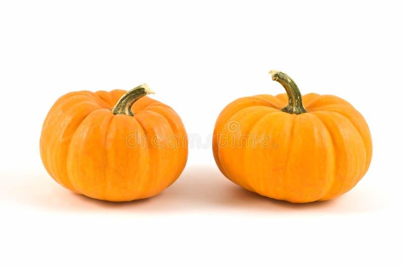 Download Miniature pumpkins stock photo. Image of gourd, harvest - 16311420