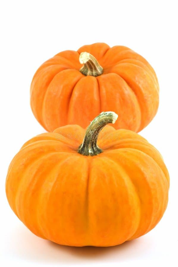 Download Miniature pumpkins stock photo. Image of decoration, pumpkin - 16340224