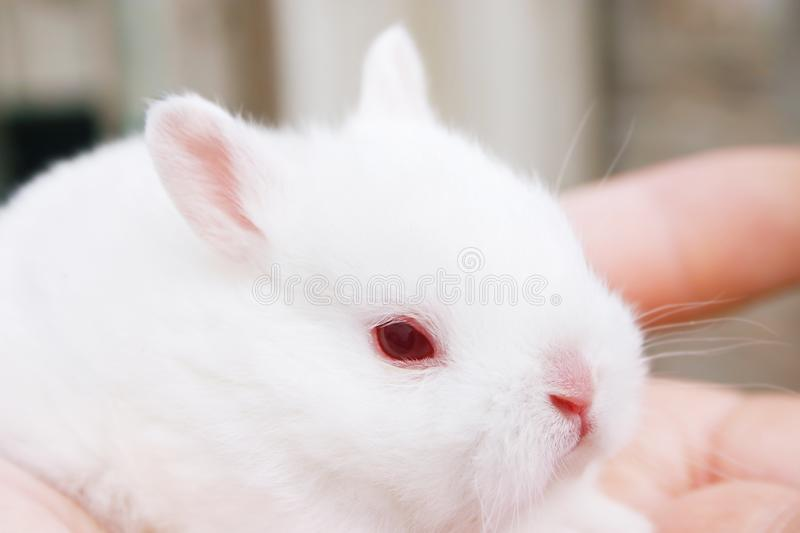 Download Miniature Rabbits stock image. Image of rabbit, bunny, dwarf - 937097