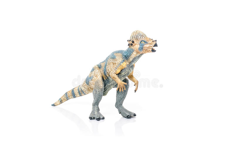 Miniature of Pachycephalosaurus toy dinosaur on white background. Miniauture of Pachycephalosaurus toy dinosaur with mouth open royalty free stock photo