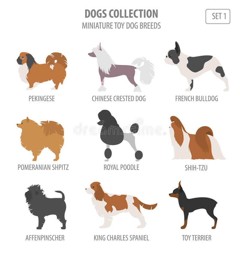 Miniature toy dog breeds collection isolated on white. Flat vector illustration