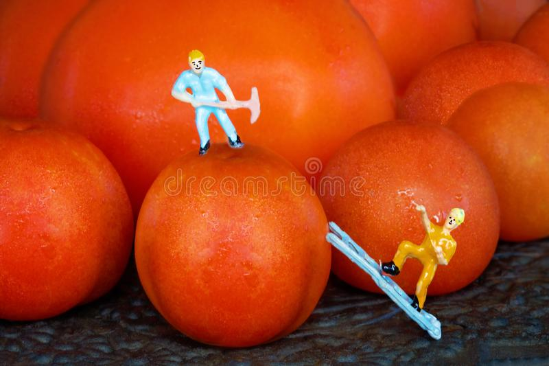 A Miniature Worker On Top Of A Cherry Tomato And Another Miniature Worker Climbing Up A Ladder royalty free stock photos
