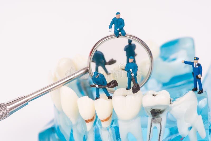Miniaturleute benutzen sauberen Zahn des zahnmedizinischen Werkzeugs oder zahnmedizinisches Modell stockfotos