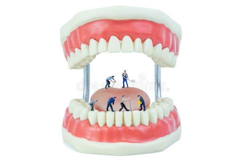 Miniaturleute und zahnmedizinischer vorbildlicher Gegenstand stockbild