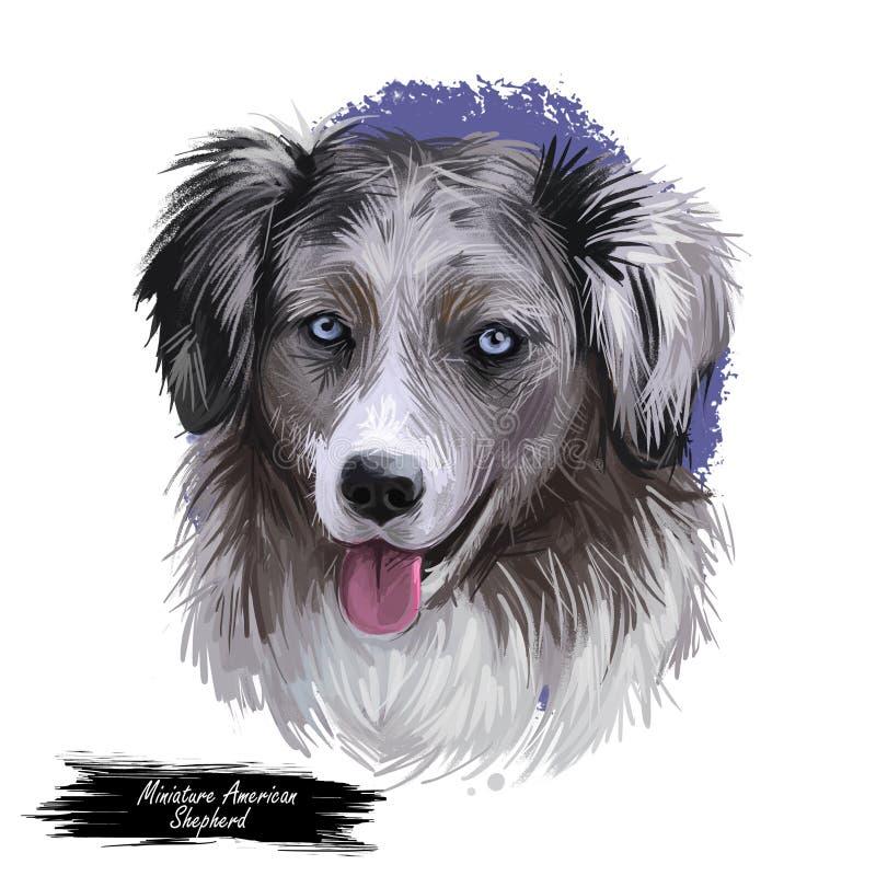 Miniaturowa Amerykańska baca, inteligentna psia cyfrowa sztuki ilustracja MAS purebred trenujący brał udział w sportach royalty ilustracja