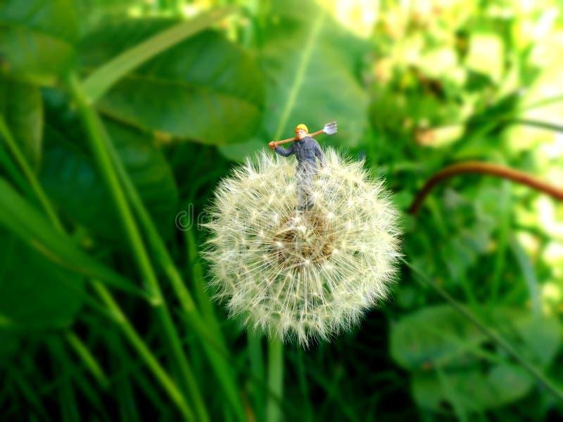 Miniaturowa ogrodniczka zbiera dandelion ziarna fotografia stock