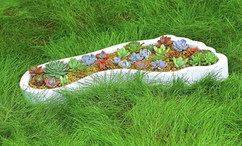 Miniaturowe sukulent rośliny fotografia royalty free