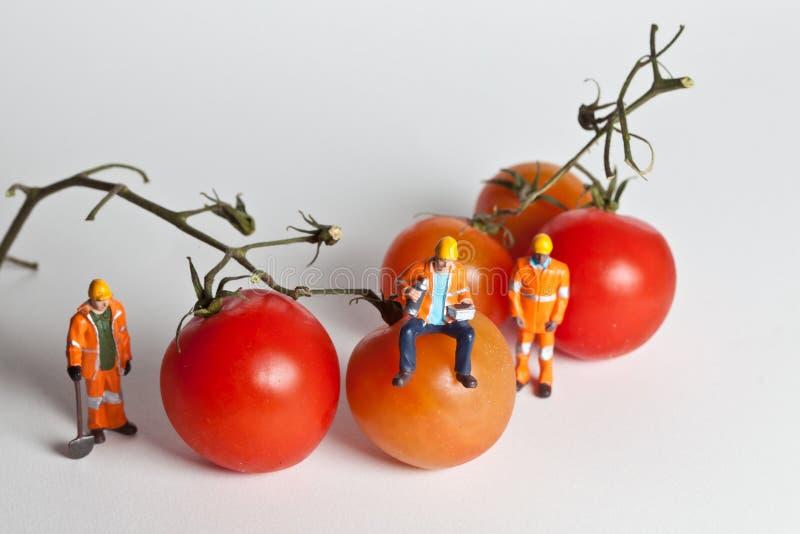 Miniaturowi ludzie w akci z pomidorami obrazy stock