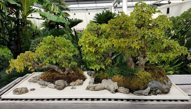 Miniaturowy Bonsai ogród obraz stock