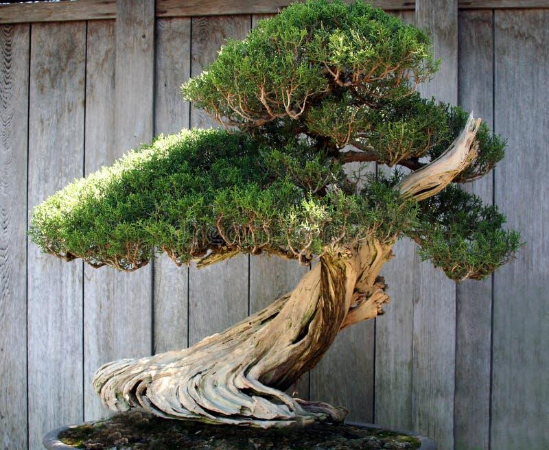 Miniaturowy Drzewo obraz royalty free