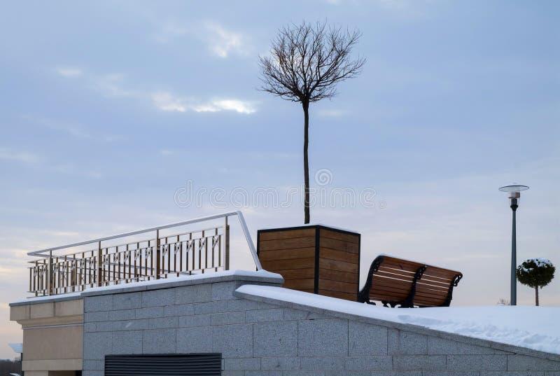 Miniaturowy drzewo w dużym drewnianym flowerpot jako miasto uliczna dekoracja w wintertime zdjęcia royalty free
