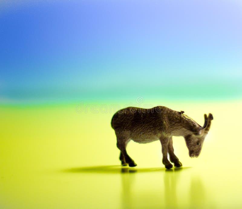 miniaturowy koźli łasowanie obraz stock