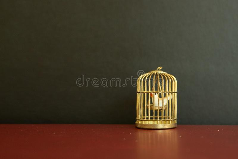 Miniaturowy złoty birdcage z małym bielem nurkował wśrodku czarnego tła na fotografia royalty free