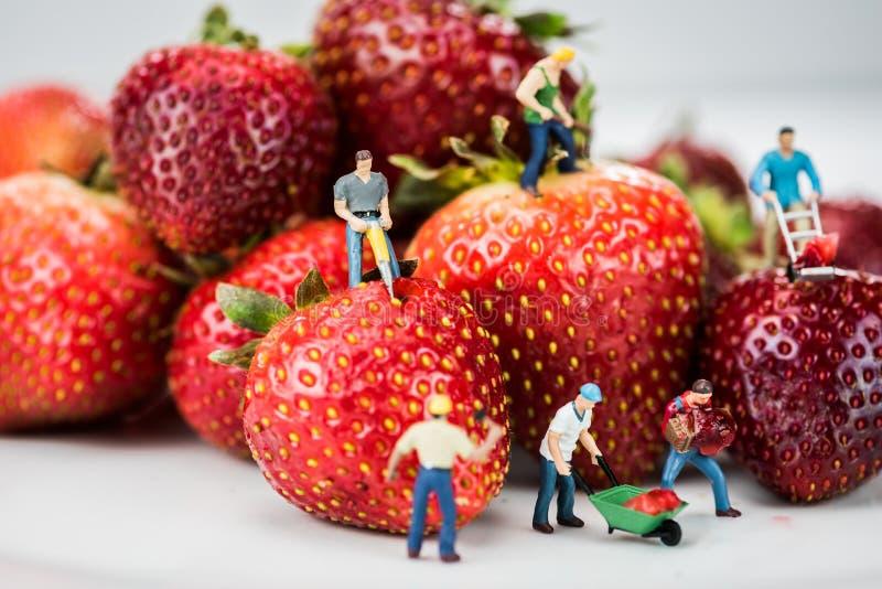 Miniaturzahlen, die Bauarbeit auf Erdbeeren erledigen lizenzfreie stockfotos