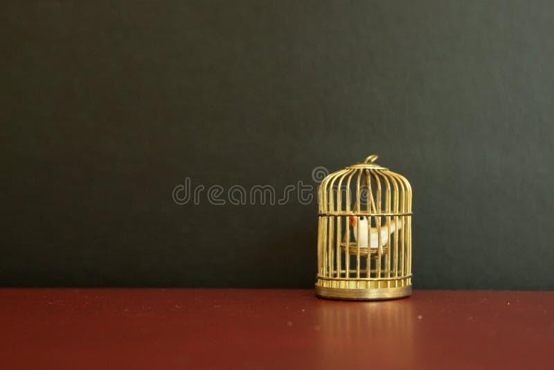 Miniatuur gouden birdcage met weinig witte duif binnen op zwarte achtergrond royalty-vrije stock fotografie