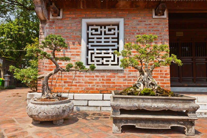 Miniatuurbomen in Tempel van Literatuur. Hanoi, Vietnam stock foto's