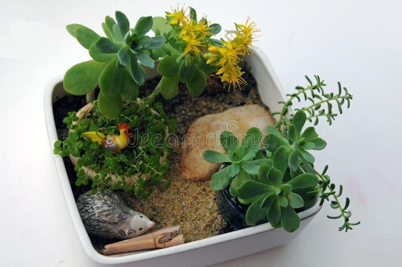 Miniatyrkrukaträdgård arkivfoton