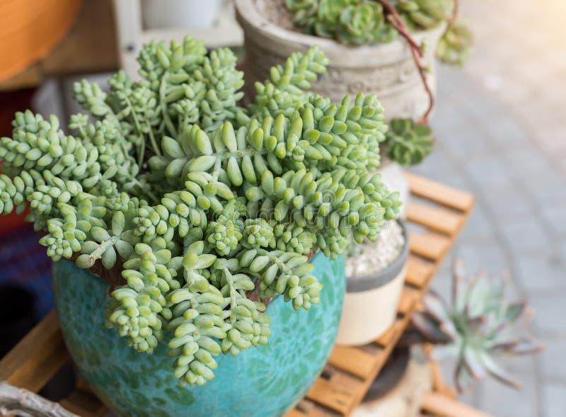 Download Miniatyrsuckulentväxter fotografering för bildbyråer. Bild av trädgård - 76702167